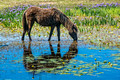 Wetland and Horses